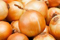 Onion - Informatieve