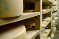 Wei voor vegetariërs - zodat u kunt genieten van het melkproduct