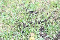 Voorzien leemgrond met gras - opmerkelijk