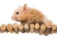 Hamster Cage zelf bouwen - Manual