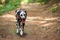 Laat hond kak - sancties na Bußgeldkatalog