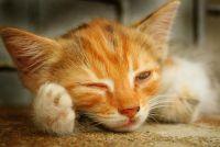 Kat in warmte - wat te doen?