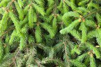 Alternatief voor de kerstboom - hoe het werkt op een begroting