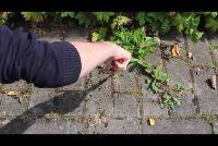 Verwijder onkruid tussen de stoeptegels