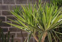 Handhaving van Indoor palm goed