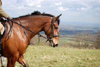 Plan online met wandelkaarten - zo succesvol paardrijden voettocht