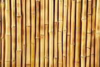 Schilderij van bamboe - Mededelingen