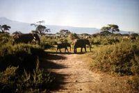 Cottage te koop in Kenia - zelf zo vertrouwd te maken met de wetten