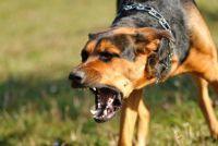 Na een hond beet - wat je moet doen om de ontsteking te voorkomen
