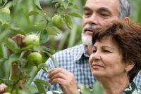 Het planten van appelbomen en andere fruitbomen - dus slaagt's