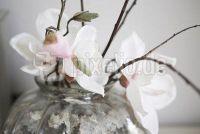 Indoor bloeiende planten met witte bloemen - de 5 mooiste bloemen