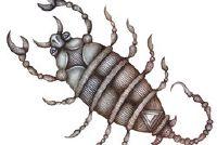 Schorpioen in Duitsland?  - Meer informatie over pseudoschorpioenen Ontdek
