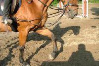 Effect van lijnzaadolie op het paard - informatie over de energieleverancier