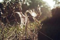 Vliegende spiders