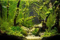 Bereken CO2 Aquarium