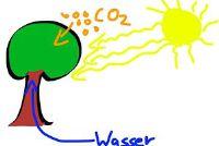 Cellulaire ademhaling van planten - dat wordt bedoeld met