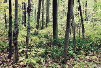 Limit afstand bomen - Informatieve