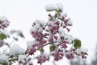 Een bloementuin in de winter - zodat je het te maken