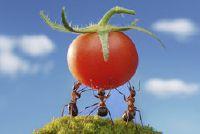 Hoe sterk zijn de mieren?