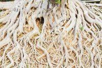 Root root keer opvalt op - een uitleg