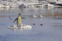 Wie de Zuidpool behoort?  - Meer informatie over Zuid- en Noordpool Ontdek