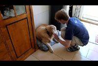 Zoals ik wennen aan mijn hond blaffen wanneer het ringen bij de voordeur?