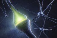 Hoeveel neuronen heeft een persoon?