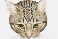 Tekening van een kat - Aufschlussreiches