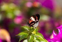 Hoe oud zijn de vlinders?  - Meer te weten komen