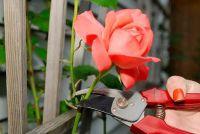 Rose Arch houten build - Instructies