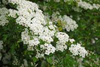 Het planten van struiken - dus uw tuin is ondoorzichtig