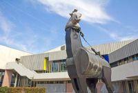 Tinker paard van Troje - zij beheert papier en karton