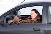 Hoeveel kost rijbewijs een auto bestuurder?  - Hoe de kosten te berekenen