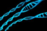 Man en banaan: DNA - Informatieve