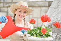 Geraniums - planten zo en je ze goed te onderhouden