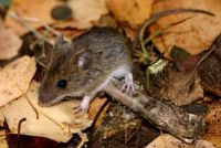 Mouse in muizenval - Gooi het dier goed