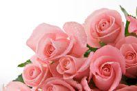 Maak rozenwater duurzaam - zo u permanent behoud van natuurlijke huidverzorgingsproducten