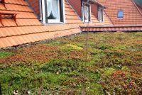 Het creëren van groene dak zelf - hoe het werkt