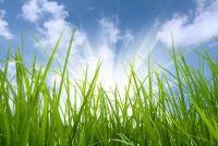 Verbrand gras - het zal groen weer in te schakelen