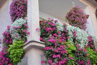 Vorstbeveiliging voor balkon planten - zodat uw planten overleven de winter