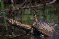 Turtles: animatie in het aquarium - een korte introductie