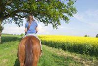 Gepresenteerd voorzieningen - Paardrijden in Starnberg en omgeving