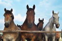 Horse Mark-conditioner - die luxe voor je haar goed