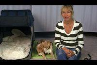 Hond gemarkeerd in het appartement - zodat u het probleem op te lossen