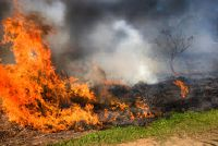 Voordelen en nadelen van de slash en branden - een korte introductie