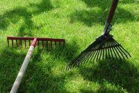 Het krijgen van een kleine tuin - dus het zal werken