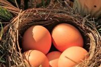 Eieren - Verwijder het ei dieet kan dus slagen
