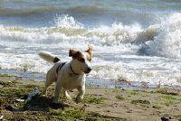 Nienhagen - Travel Tips voor een vakantie met honden