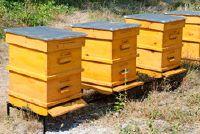 Beehive - Aanwijzingen voor Langstroth en Dadantzargen