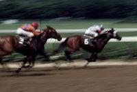 Horse - speed